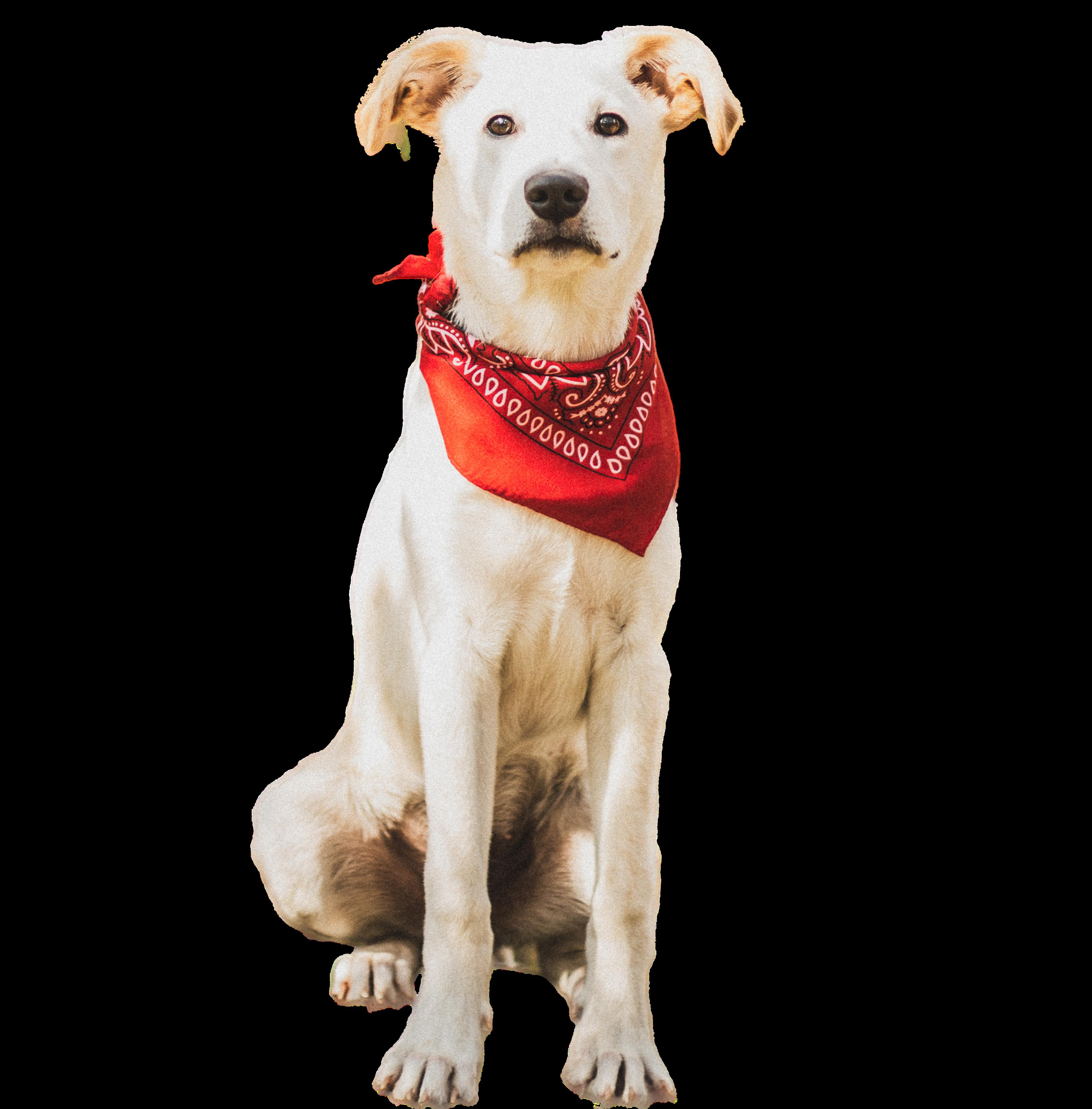 Loki the Webservices Dog